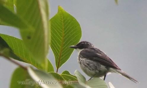 Bird found in Valley of Flowers