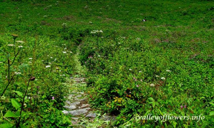 Trek inside the valley, flowers can be seen on both side of the trek.