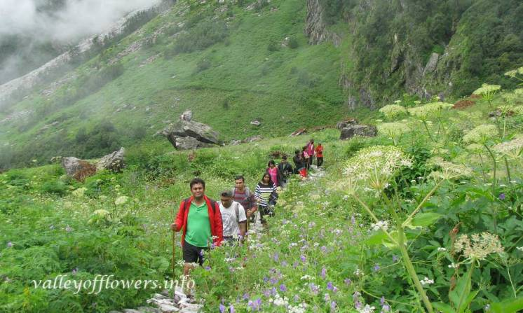 Trek inside the valley of flowers.