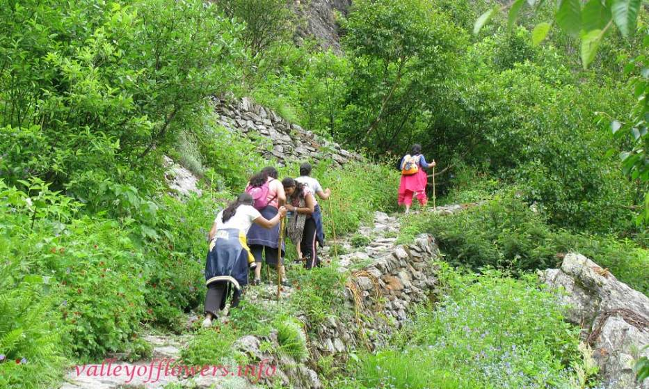 Valley of flowers trek : 2.5 km from Ghangaria, there will be flowers on the both side of the trek