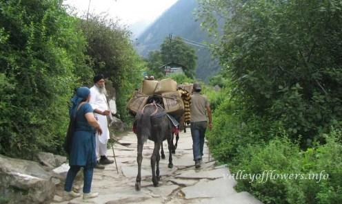 Valley of flowers trek Govindghat to Ghangaria, Ponies carrying the supplies