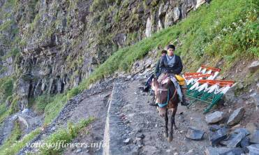 Ghangaria to Hemkund Sahib trek : The trek was under construction, you will find it in better shape now.