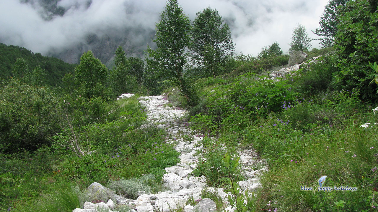 Where is Valley of flowers National Park Located