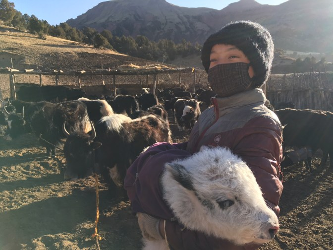 2018-04-03 Yak herder girl with calf