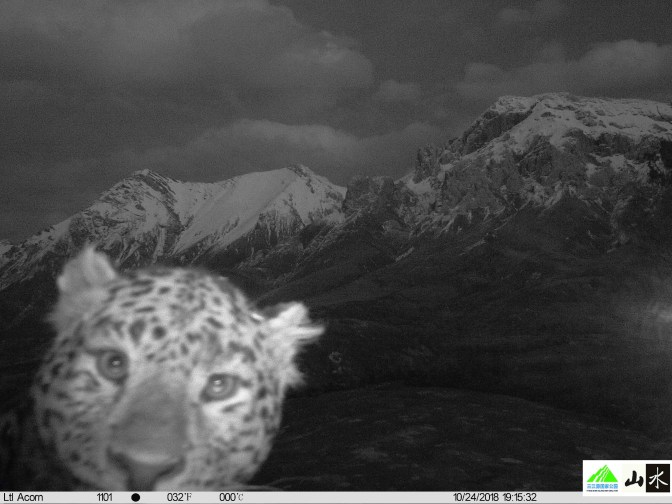 Leopard-close-up-with-mountain-background.jpg