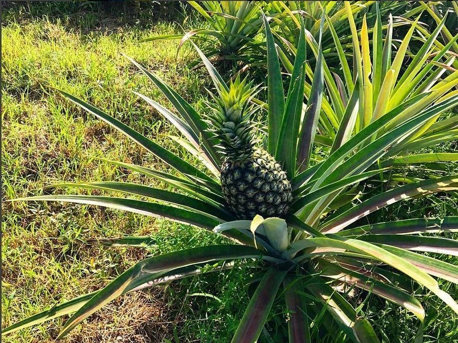 Plantation Tours and Events Valley of the Latte Adventure Park Guam