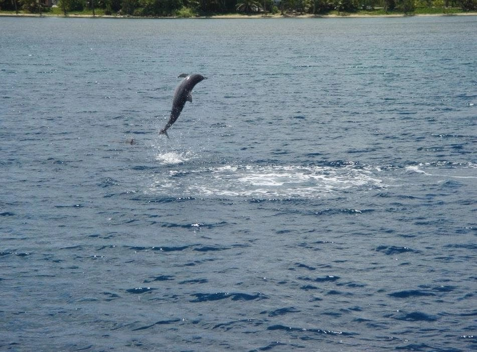Guam, Turtle Tours, Dolphin Watching, Iruka Watching, Tours