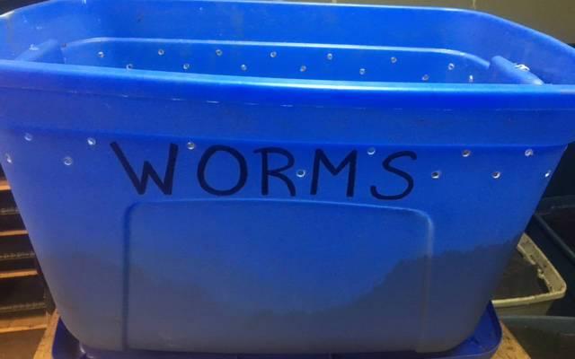 Setting Up a Super Simple Worm Bin