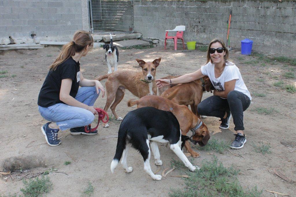 PROTECTORA DE ANIMAIS BAISENPULGAS