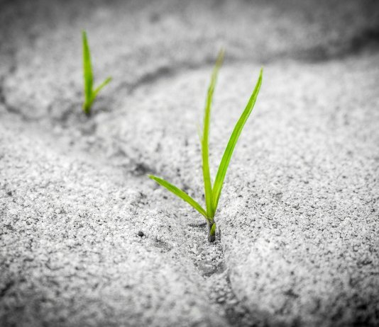 efectos-de-la-covid-en-el-medio-ambiente