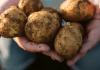 PepsiCo en su apuesta por un sistema alimentario más sostenible