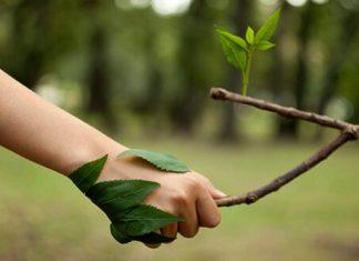 ¿Por qué tener una vida sustentable 1.5?