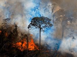 La presión a las corporaciones puede salvar la Amazonia de la destrucción
