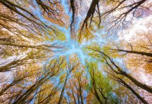 CEMEX recibe el Corporate Conservation Leadership Award