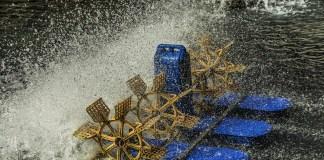 La acuicultura y su lucha para acabar con el hambre