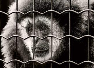 Bienestar animal… ¿en los laboratorios?