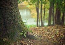 La biodiversidad de los suelos es fundamental para alimentar al planeta