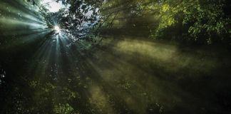 Natura &Co es reconocida como una de las empresas más sustentables del mundo