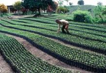 COVID-19 hace retroceder los avances contra el hambre y la pobreza