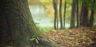 Destrucción de ecosistemas forestales