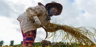 La pandemia aumenta la desigualdad entre géneros: en 2021 sólo el 43% de las mujeres tendrá trabajo