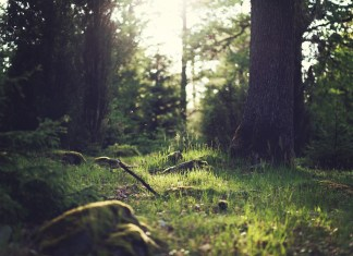 Construir un mundo más resiliente y sostenible