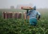 Transformar para alimentar: reimaginar un sistema alimentario para todos