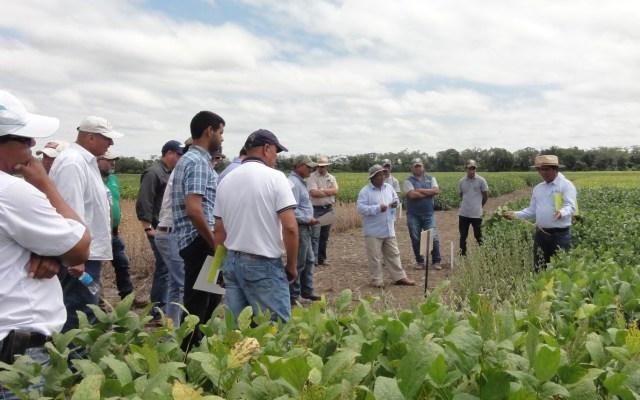 Fundacruz, 22 años aportando a la investigación en soya y promoviendo la transferencia de tecnología agrícola en Bolivia.