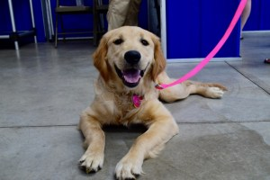 dog owner education