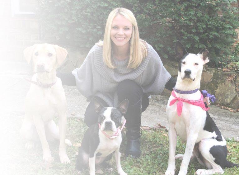 Chattanooga dog behavior training