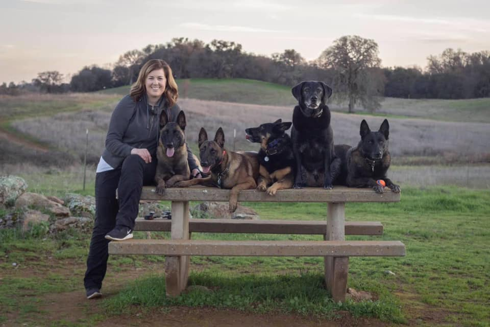 dog behavior training specialist