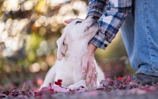 Service dog breeders boise idaho
