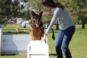 Spokane German Shepherd puppy training