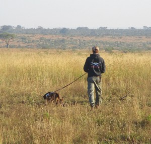 K9 Training in south africa