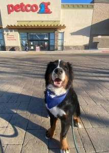 dog at pet friendly stores in boise