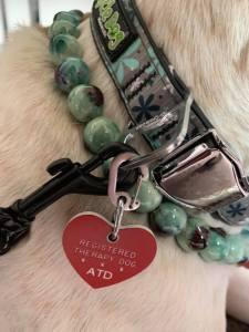therapy dog certification collar spokane washington
