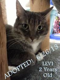 levi 3 ADOPTED