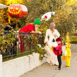 Trick or treating down Johnson Street in Healdsburg