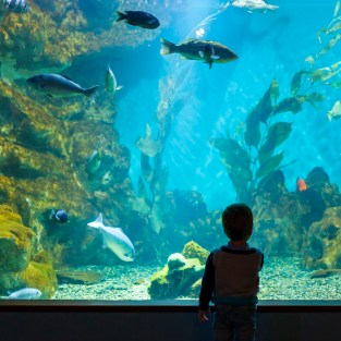 An afternoon with Dad at the Academy of Sciences