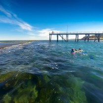 Snorkeling in Port Noarlunga