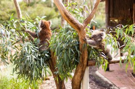 A day at Cleland Wildlife Park