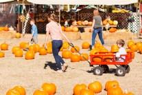 Choosing our 2017 pumpkins at Grandma's Pumpkin Patch