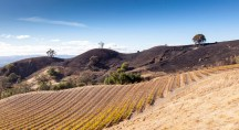 Day XV: Exploring the mountains and vineyards above Alexander Valley