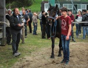 2015-05-03-cavalli a morfasso LR-3537