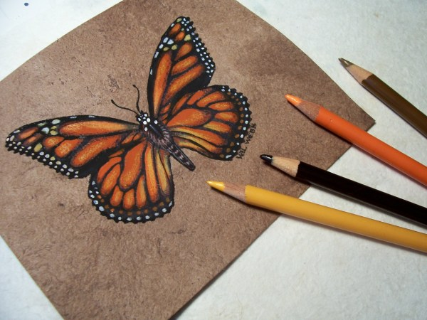Tutorial Tips Drawing Butterfly