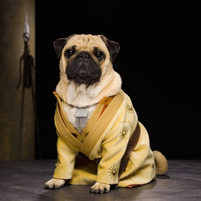 Vamers - Geekosphere - Mash-Up - The Pugs of Westeros star in A Game of Bones Dinner is Coming - Oberyn Martell