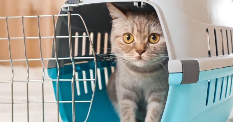 As principais companhias aéreas permitem que animais de pequeno porte viagem junto com seus donos - Viajar com o pet
