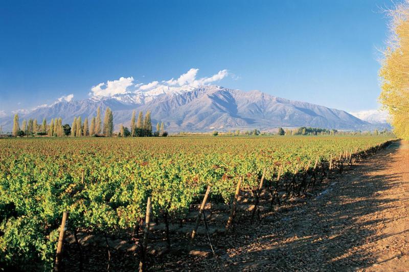 Vinícola Concha y Toro é um dos lugares mais apaixonantes do Chile - É seguro viajar sozinha.