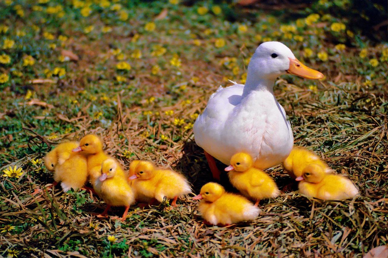 tienes-una-familia-numerosa