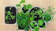 Como preparar o local de plantio